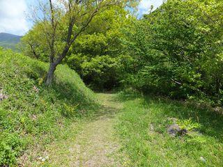 森林浴散歩道1